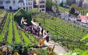 vinogradnikvparize