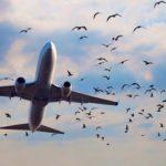 Рейс из Парижа столкнулся со стаей птиц